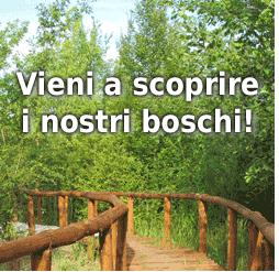 Vieni a scoprire i nostri boschi!