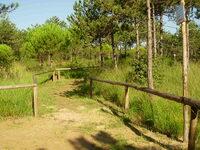 Foto di percoso forestale a Bibione