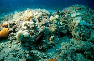 """Immagine di """"tegnua"""": affioramento roccioso dell'alto Adriatico"""